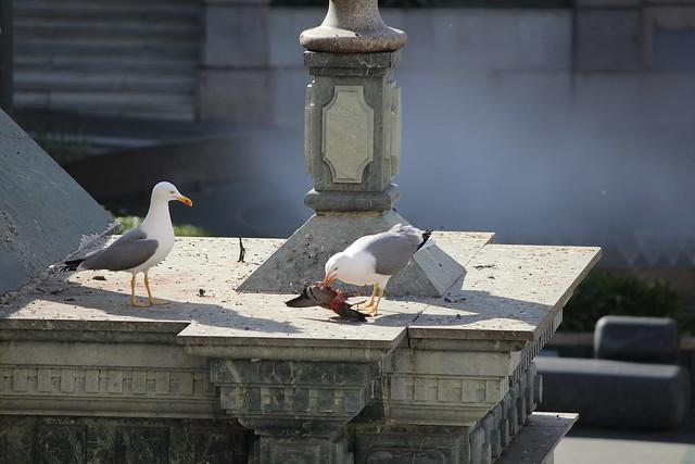 Detalles de la ciudad de Ceuta