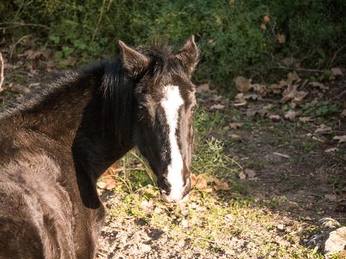 Cheval - Horse   by BourrinOman
