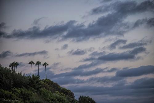 danapoint darkness palmtrees palmtree palm california clouds ca cloudsorangecounty cloudsstormssunsetssunrises cloudsbluesky cloudy cliff cliffside theoc orangecounty oc outdoor saltcreekbeach bushes bush hillside hill goldenstate socal southerncalifornia sunset evening eveninglight eveningskies
