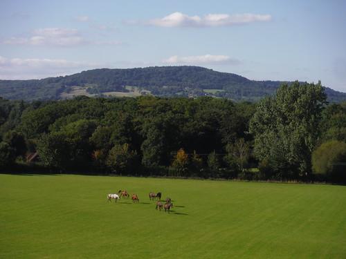 Horses in Field and Black Down SWC Walk 294 - Pulborough to Halfway Bridge (via Tillington)