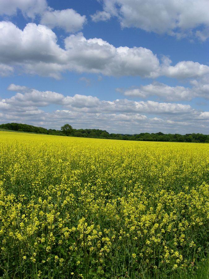 Field near Upper Farringdon