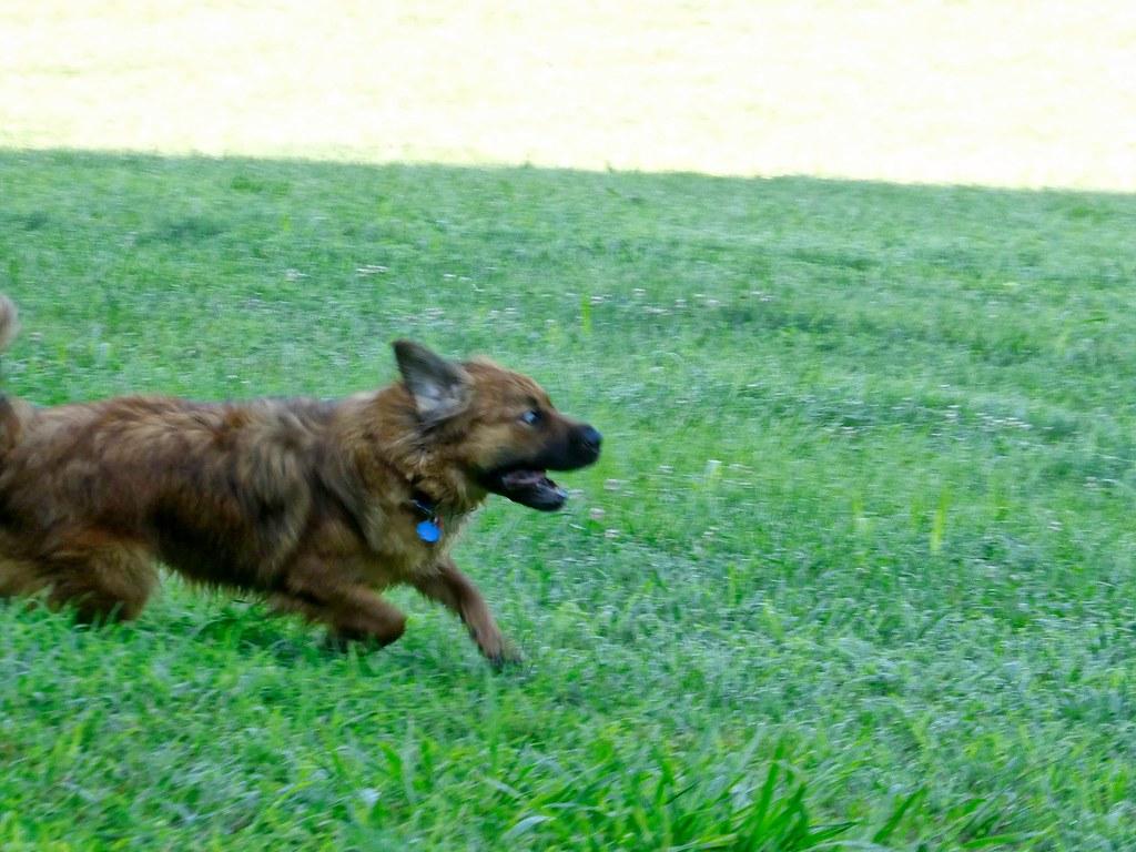 Garys Road Dog Park Aug 3, 2017, 8-043