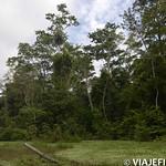 Viajefilos en la Amazonia, Peru 098