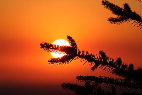 forest fire sunrise calgary alberta canada july 2017