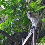01 Viajefilos en las Batu Caves 14
