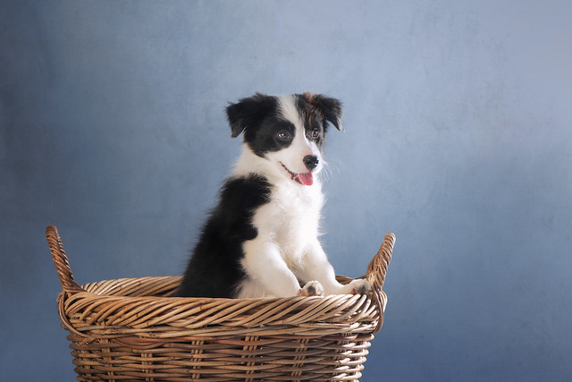 'Hope in a Basket'