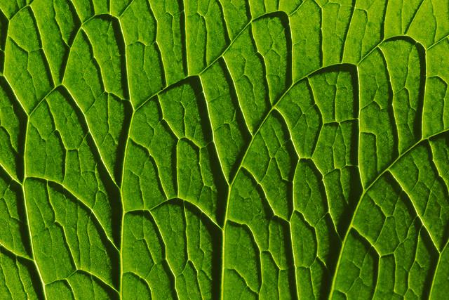 Shadow artwork of a leaf