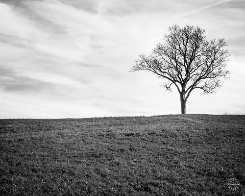 grass tree stormking skyday landcape newyork rural blackandwhite monochrome orangecounty newwindsor unitedstates us