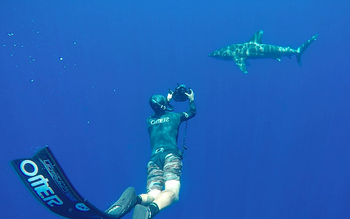 Oceanic Whitetip Shark, Kona, Hawaii, USA | by peterbryan718
