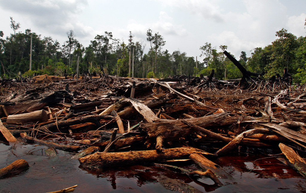 Debris from cleared land in Central Kalimantan