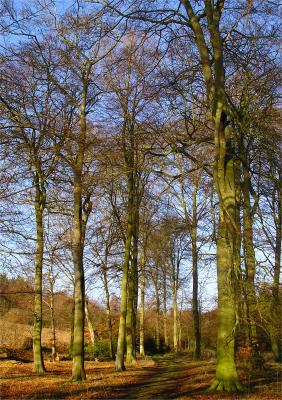 a Trees in Winter Sun