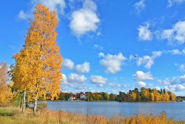 Árbol y lago en Otoño en Helsinki