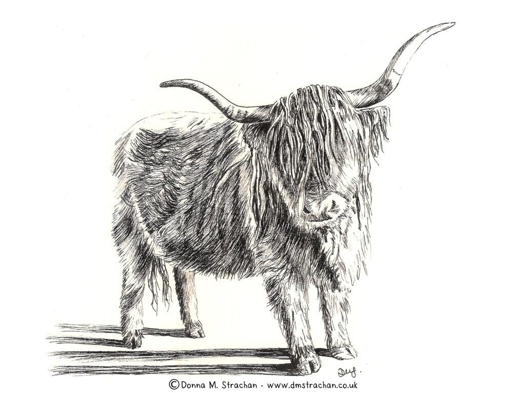 Highland Cow - Inktober day 5