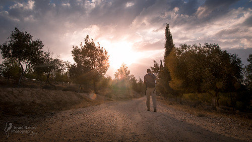 canon israel nature forest sunset winter goldenhour 6d fullframe sigma art 24105 trees sun sky clouds