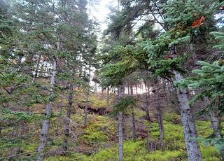 Hallormsstadaskogur-hike | by quirkytravelguy