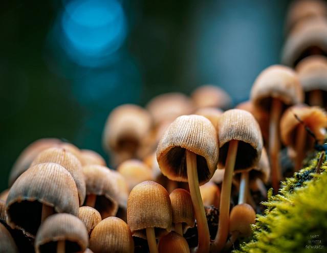 Pilze / mushrooms