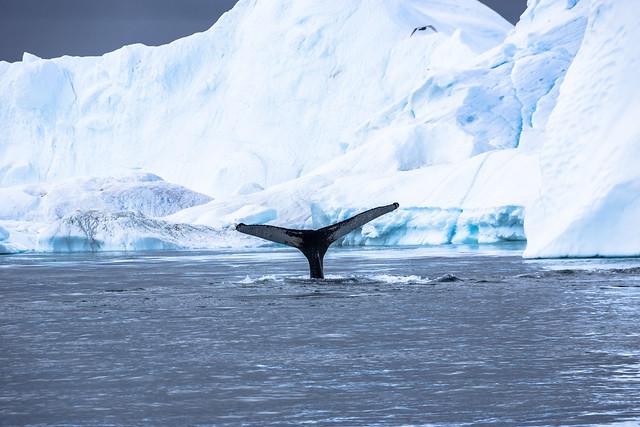 Whale Watching - High Riser