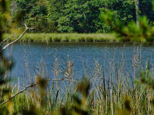 battlecreek biscoegrayheritagefarm calvertcounty lumix maryland panasonic photolemur tz90 water zs70