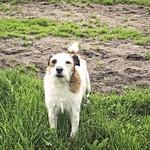 2002-05-19_19-01-02 - Kleiner Hund