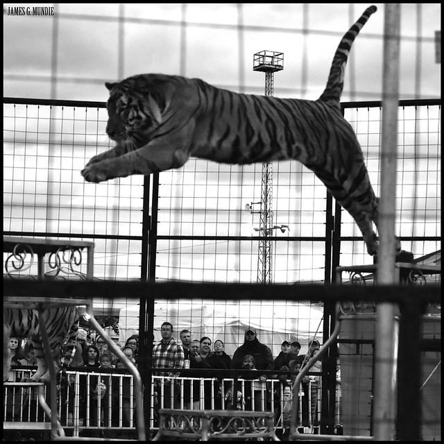 Blaszak Tigers