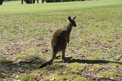 Anglesola Golf Club