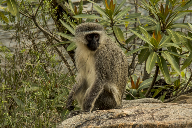 South Africa no 2_022