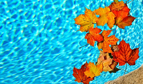 autumn-fall-leaves-falling-swimming-pool | by whampoaorg