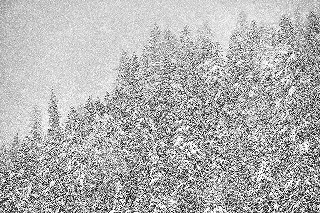 Italy, snowfall and forest