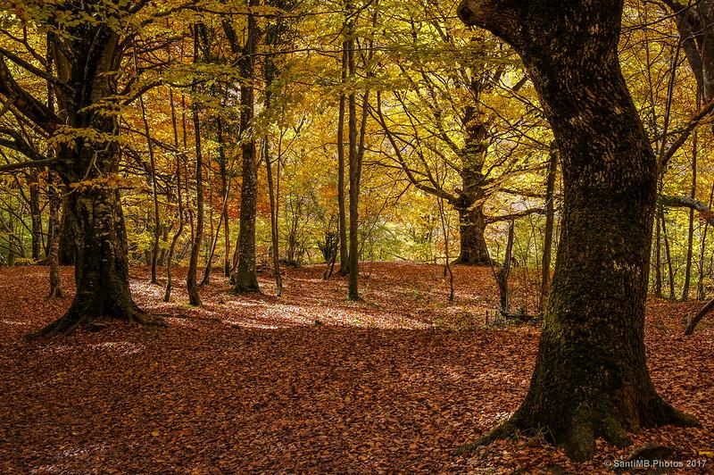 El bosque silencioso