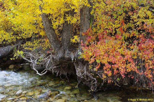 Lamoille Creek Autumn