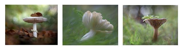 Fungi at Knole Park, Kent