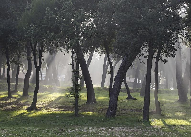 First fall mist