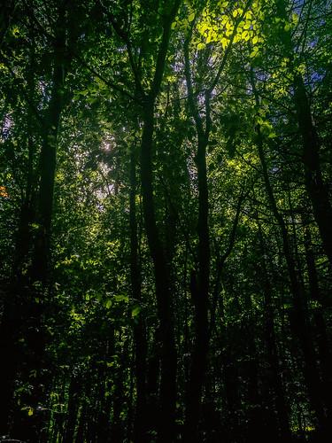 flowersplants landscape backlittrees forest ireland shadows shady trees countyroscommon ie