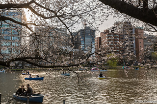 Ueno-Park-76 | by luisete
