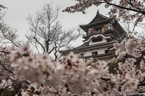 Inuyama-castillo-63   by luisete
