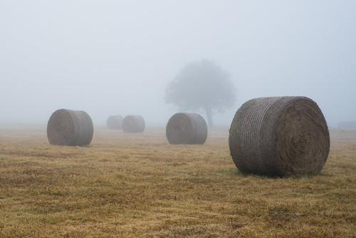 fog foggy farm hay haybails norman oklahoma unitedstates us