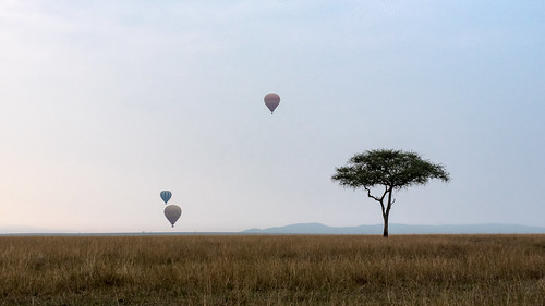 africa acacia sunrise dawn vacation mara porinilioncamp plains morning blue kenya flight gamewatchers maasaimara sky grassland hotairbaloon safari wilderness masai narokcounty ke