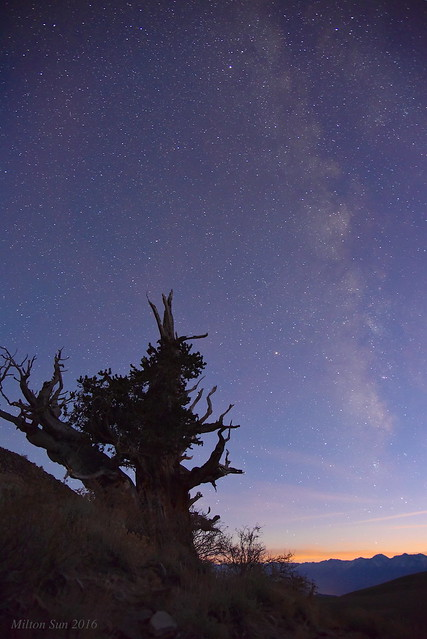 Milky Way over the Thousand Years Pine