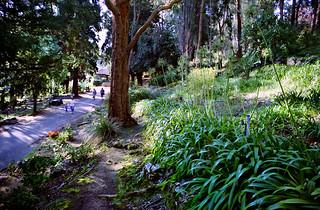 Sep 1998 - Early spring blooms at Araluen Botanic Park, Roleystone, Western Australia, Australia