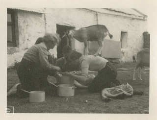 Francesca overseeing spud bashing, 1950