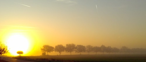germany deutschland rheinlandpfalz weingarten sunrise autumn herbst sonnenaufgang