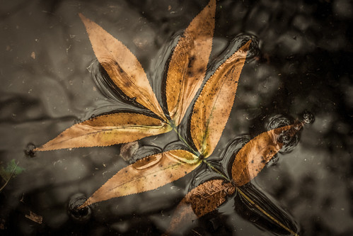 autumn rainyday gloomy fallenleaves puddle ontheroad reflections grit texture fall decay seasonintransition nikond500