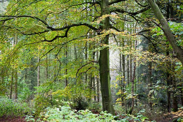 A romantic autumn forest