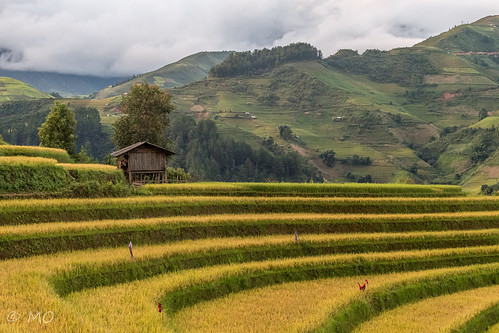 Rice terrace in MuCangChai | by mathieuo1
