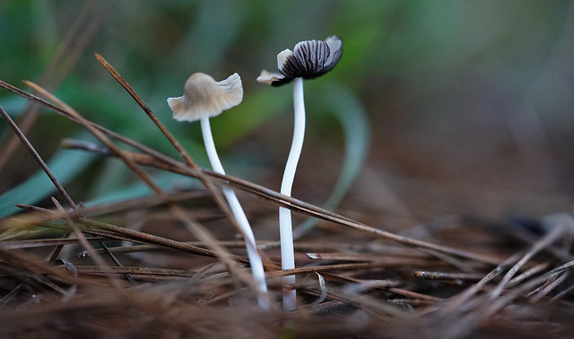 Mushrooms (Macro)