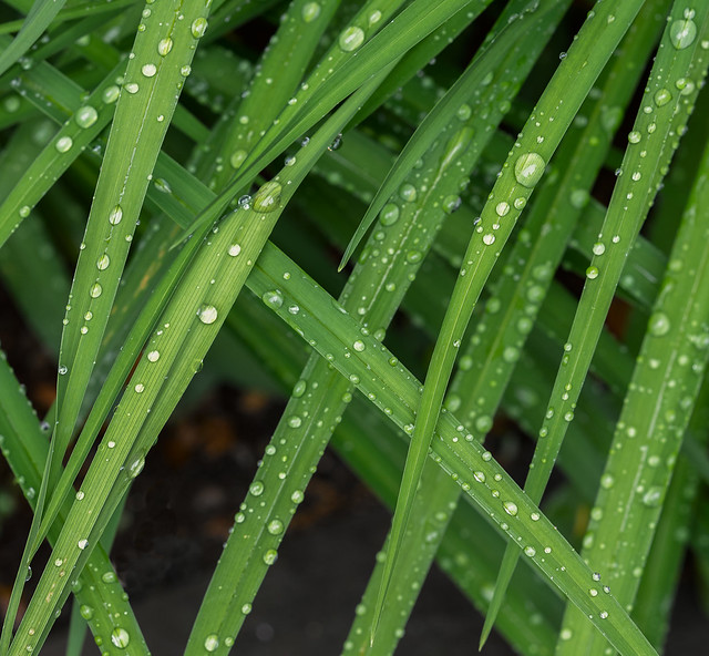 Intersecting leaves