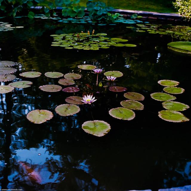 Hasselblad at Duke Gardens