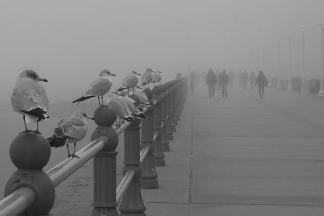 The fog unites us