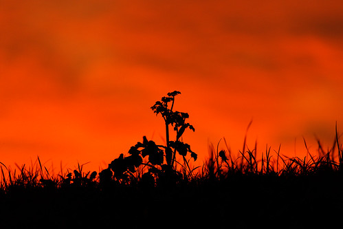 twilight silhouette lowkey lighting sunset dusk contrast flora grass weeds riverbank outdoors outside braitain england northlincolnshire humberside neaphousewharf fullframe eos1dxmk2 ef100400 umbra penumbra reds rivertrent clouds sky