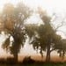 Autumn Fog by adambralston74